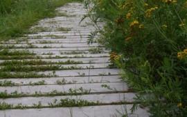 Eco PathWay